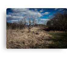 Bare tree with brush Canvas Print