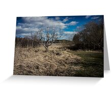 Bare tree with brush Greeting Card