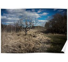 Bare tree with brush Poster