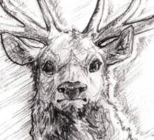 Noble - Red Deer Stag in Pencil Sticker