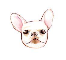 French Bulldog lovers! by giuliaiulia