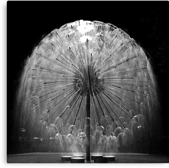 Dandelion by reflexio