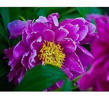 Garden Peony Photographic Print