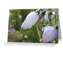 Gentle close up Greeting Card