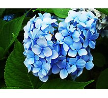 Majestic blue infusion Photographic Print