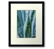 Agave by moonlight Framed Print