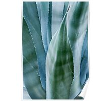 Agave by moonlight Poster