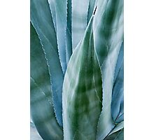 Agave by moonlight Photographic Print