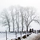 In The Bleak Mid Winter by Lynne Morris