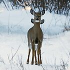 Four eared Deer by lloydsjourney