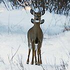 Four eared Deer by lloydsjourney