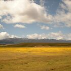 High Desert Yellow by DianeStevenett