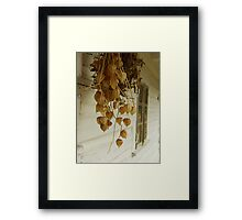 Dried Framed Print