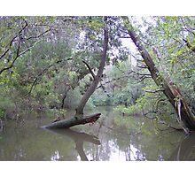 A Floridian Flood Photographic Print