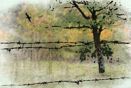 Unalarmed spot behind the barbed wire by Valentina Walker