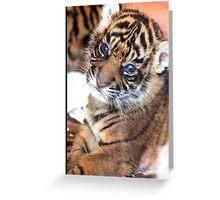 Tiger Baby Greeting Card
