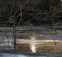 Saluda River by Roger Jewell