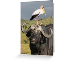 CAPE BUFFALO - KENYA Greeting Card