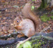 Precious Red Squirrel  by Gerry  Temple
