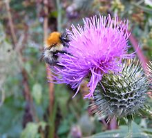Bumble Bee on the Thistle by Gerry  Temple