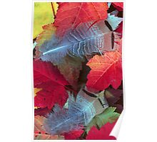 GROUSE FEATHERS ON LEAVES Poster