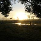 Sunrise at Grandmas by amcgr