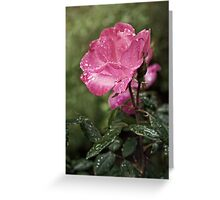 Raindrops on Roses... Greeting Card