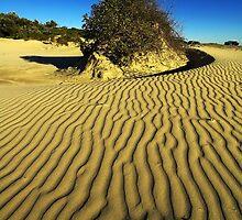 Dunes at Anna Bay 1 by Denise McDermott