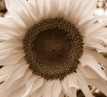 sunflower close up sepia Sticker