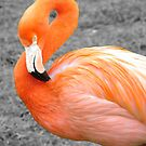 Flamingo by Martina Fagan