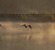 Three Geese in the Mist by reindeer