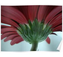 Edge of the Petal, Red Gerbera Daisy Flower, Lovely Card, Prints & Poster Poster