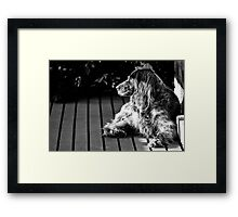 BUFFY THE DOG Framed Print