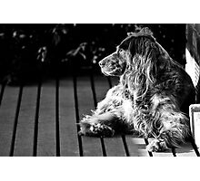 BUFFY THE DOG Photographic Print