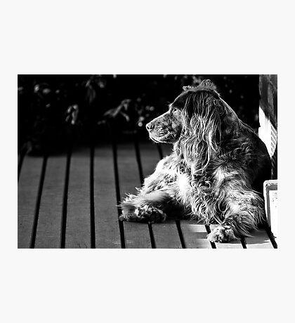 BUFFY THE DOG Photographic Print