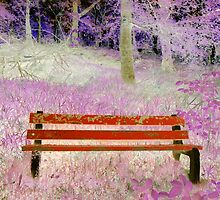 Elgin Bench by ©The Creative  Minds