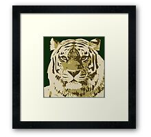 Tiger head in three colors Framed Print