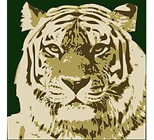 Tiger head in three colors Photographic Print