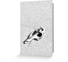sand shell Greeting Card