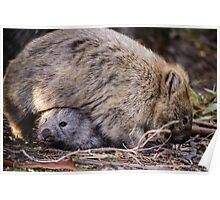 Wombats Poster