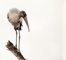 Lonely Stork by Phillip  Simmons