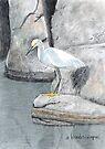 Snowy Egret by arline wagner