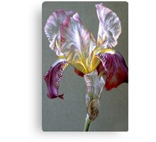 Flag Iris watercolor and gouache  Canvas Print