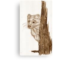 Pine Marten in pencil Canvas Print