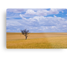 Almost ready for the harvest Metal Print