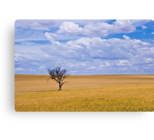 Almost ready for the harvest Canvas Print