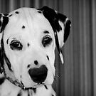 Spots and Stripes by Rhana Griffin