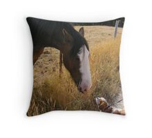 making a new equine friend Throw Pillow