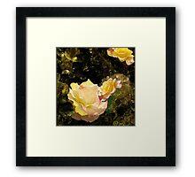 Golden Roses Framed Print