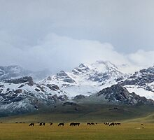 Shepherd's land by Leo Shum